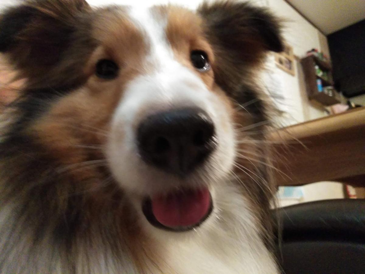 吠え疲れた犬の画像