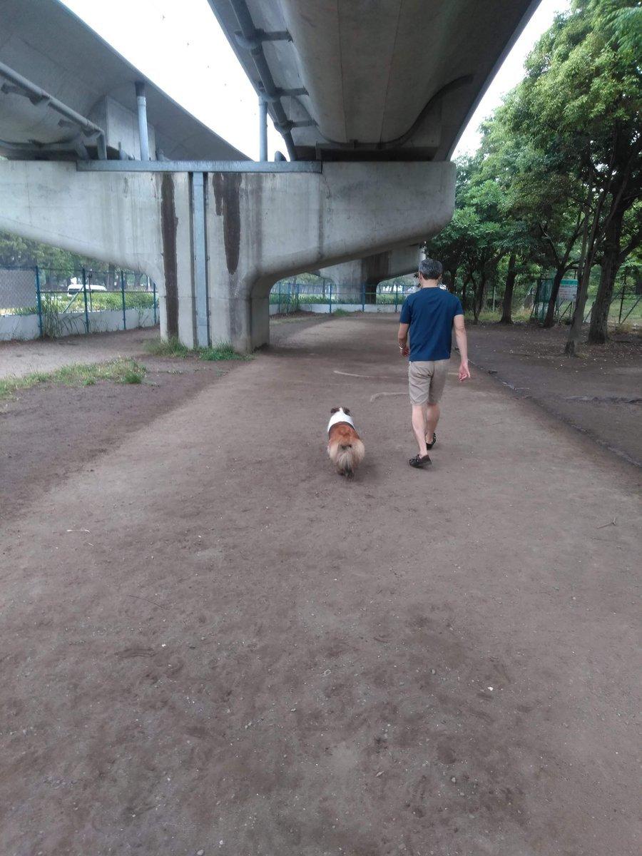 海の公園 犬の遊び場