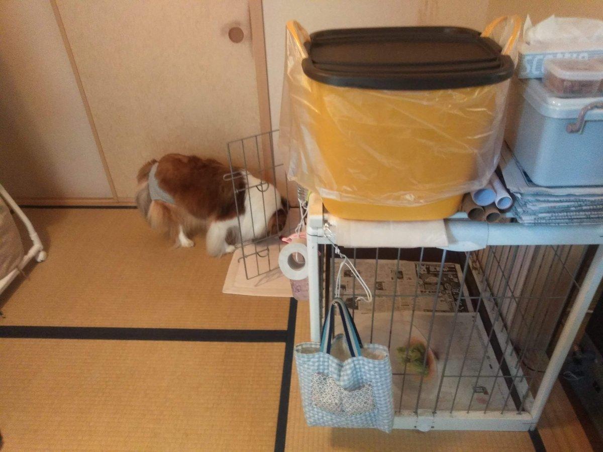 サークルと犬用品