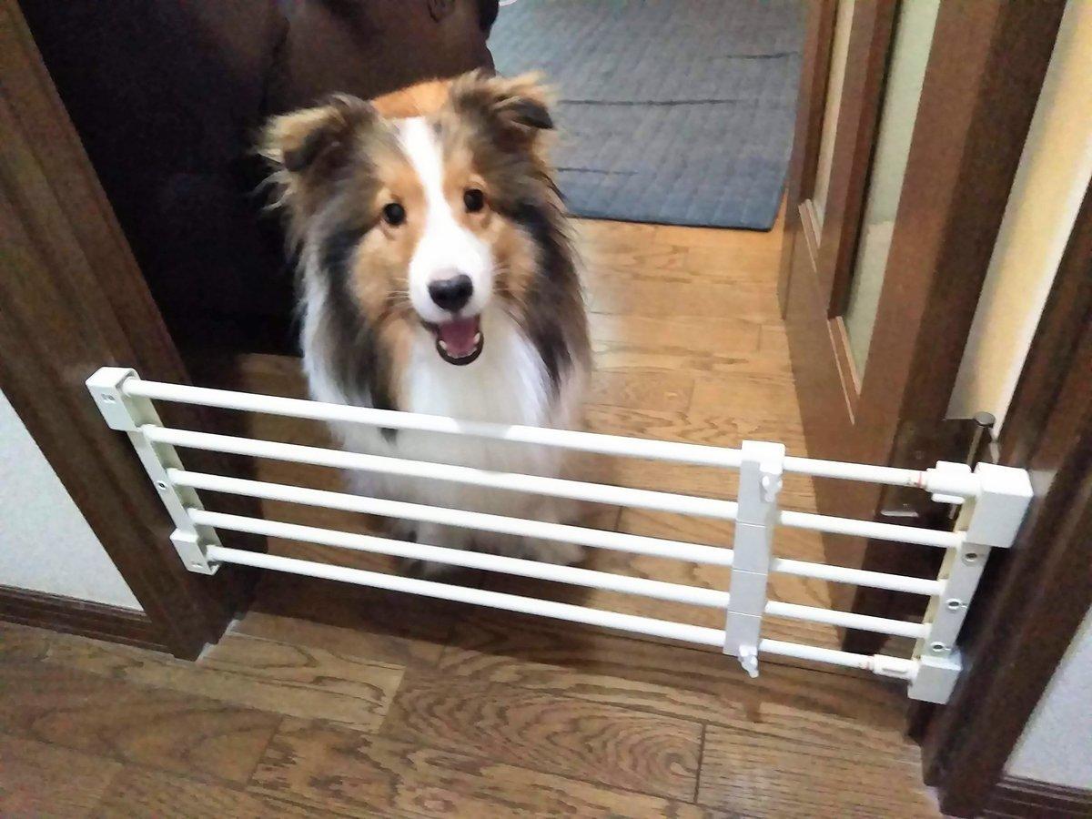 犬とドアゲート代わりのつっぱり棚