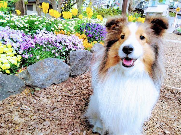 花壇の前で笑顔の犬