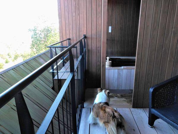山紫水明の温泉露天風呂をのぞむ犬