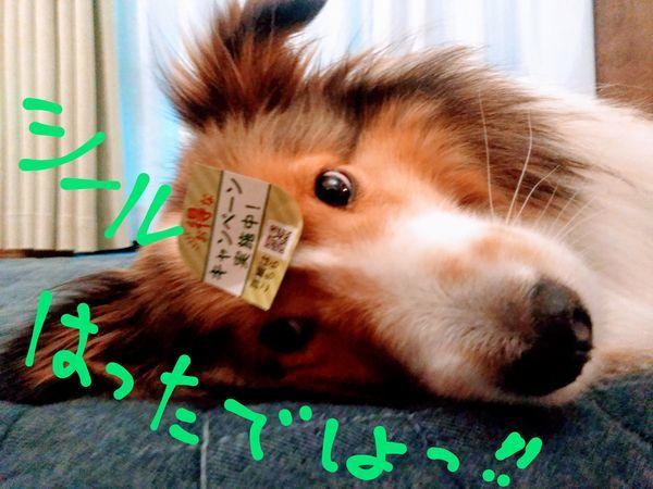 おでこにシールを貼られた犬