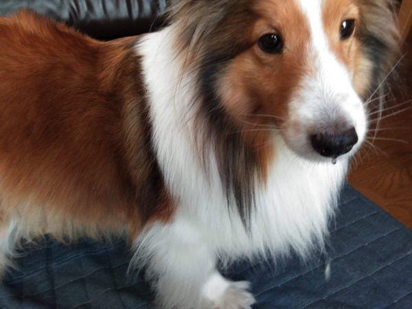 飼い主の様子を伺う犬