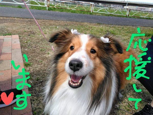 笑顔で応援する犬
