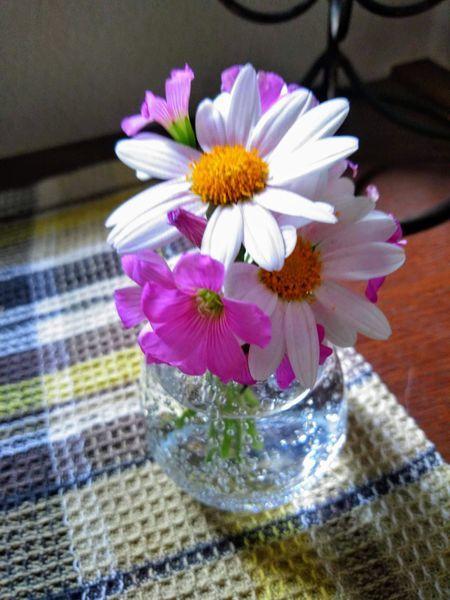 小さなガラスの花瓶のマーガレット