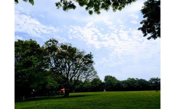 本牧山頂公園の芝生の広場