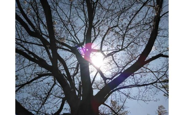 木々の間から空と将来を見つめる