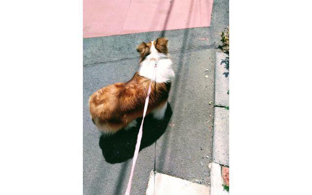 アスファルトを散歩中の犬
