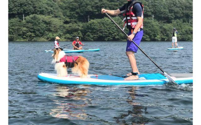 サップの先頭に立つ犬と漕ぐ飼い主