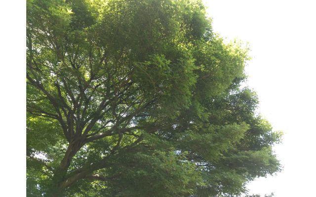 大木の画像虚ろなイメージ