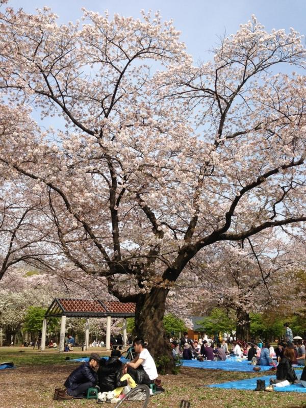 f:id:midori_niki:20130402181935j:image:w360