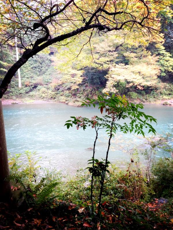 f:id:midori_niki:20131113140025j:image:w360