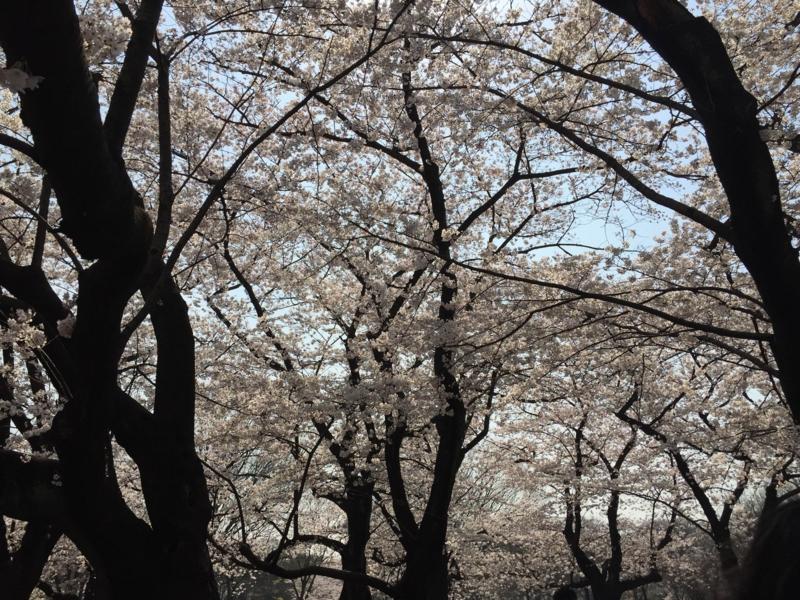 f:id:midori_niki:20150407115131j:image:w640