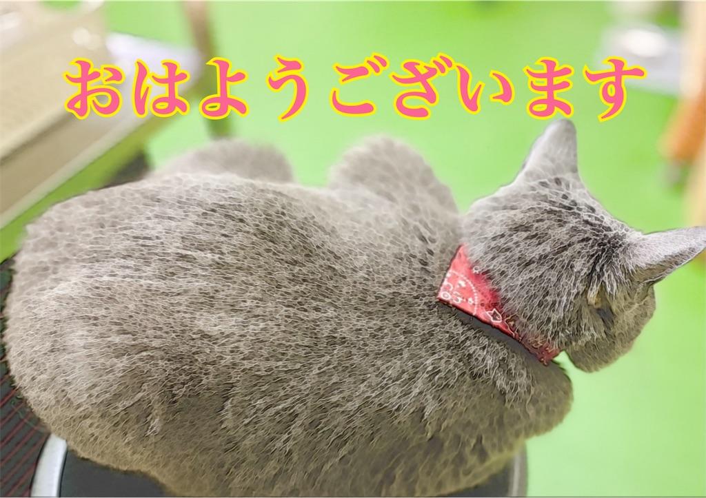 f:id:midorisuke:20210619182723j:image