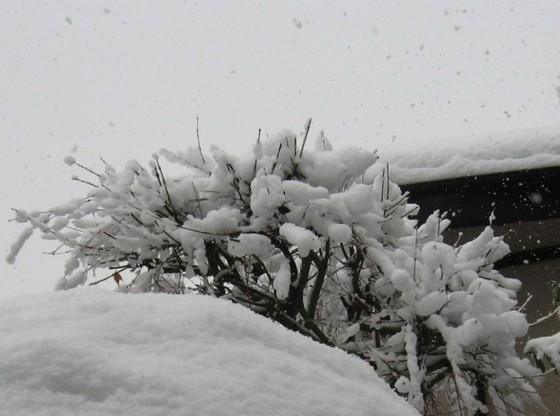 雪 (2008・2・3)