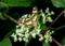 オトコエシと蝶