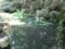 岩松院 蛙合戦の池