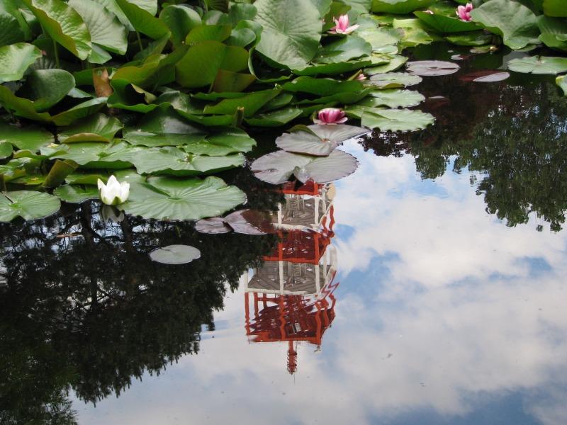 旧庁舎の池