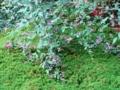 国立能楽堂 中庭の萩