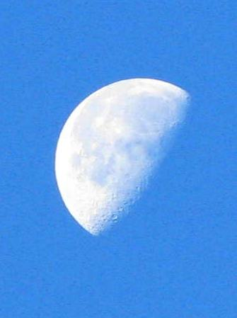 11月19日 朝の月