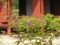 東院庭園のコムラサキ