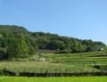 高円山の山裾