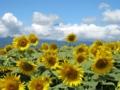 甲斐駒ケ岳と向日葵
