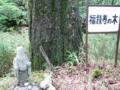 福禄寿の木