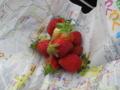 苺を頂く 喉が渇いていたのでとても美味しかった