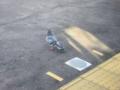 横須賀線を下車する鳩