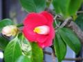 婆の花(ばあのはな)