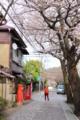 大蔵幕府跡付近の桜