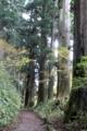 東海道杉並木