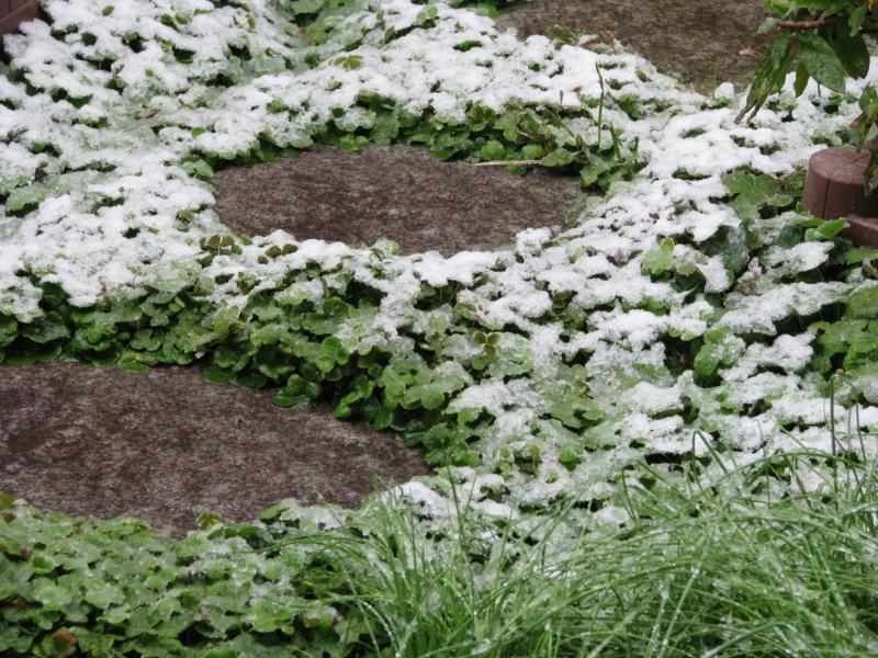 春分の日の雪