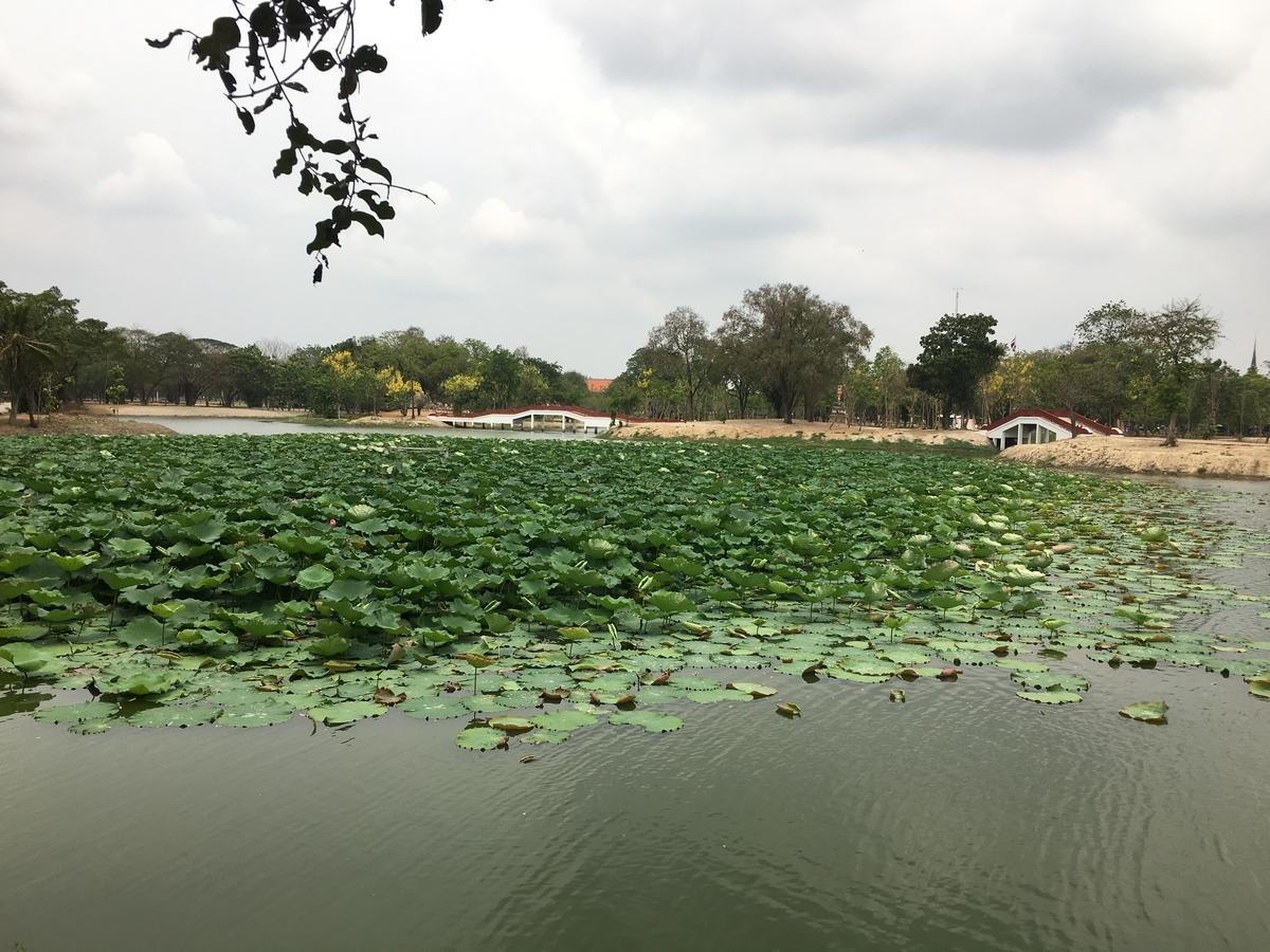公園の中には池がある