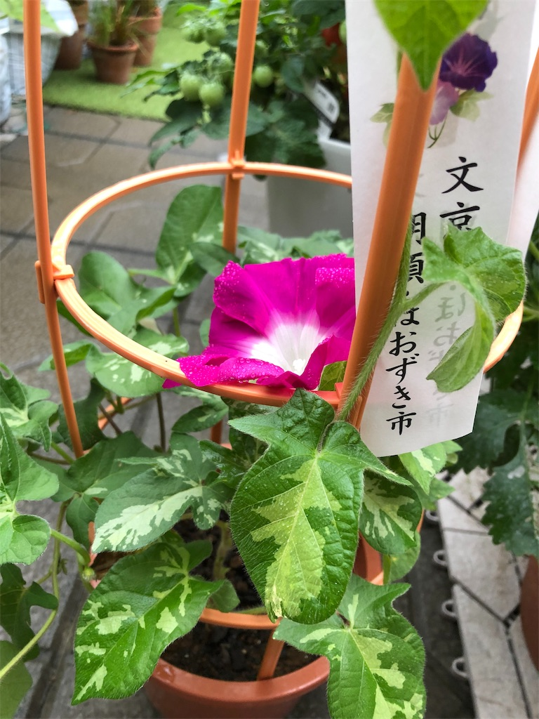 f:id:mieko-chan:20190722120749j:image