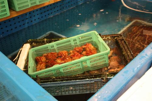 f:id:mifasorashido:20120914121556j:image