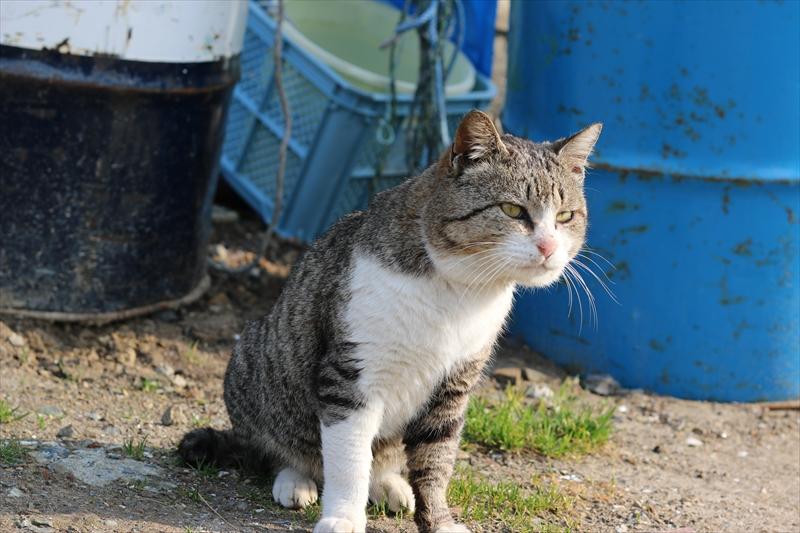 f:id:mifasorashido:20140401091231j:image