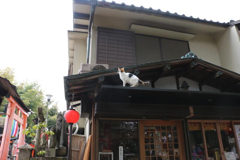 f:id:mifasorashido:20170214203717j:image