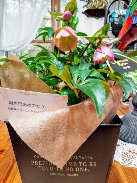 f:id:miharu-chan:20200120133859j:image