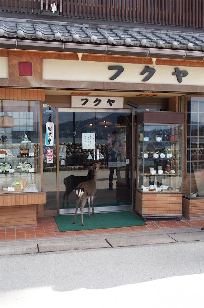f:id:miho-tachikawa:20161205113815j:image
