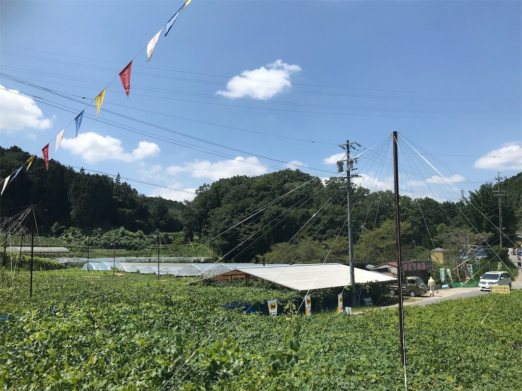 f:id:mihoboshi:20190811162420j:image
