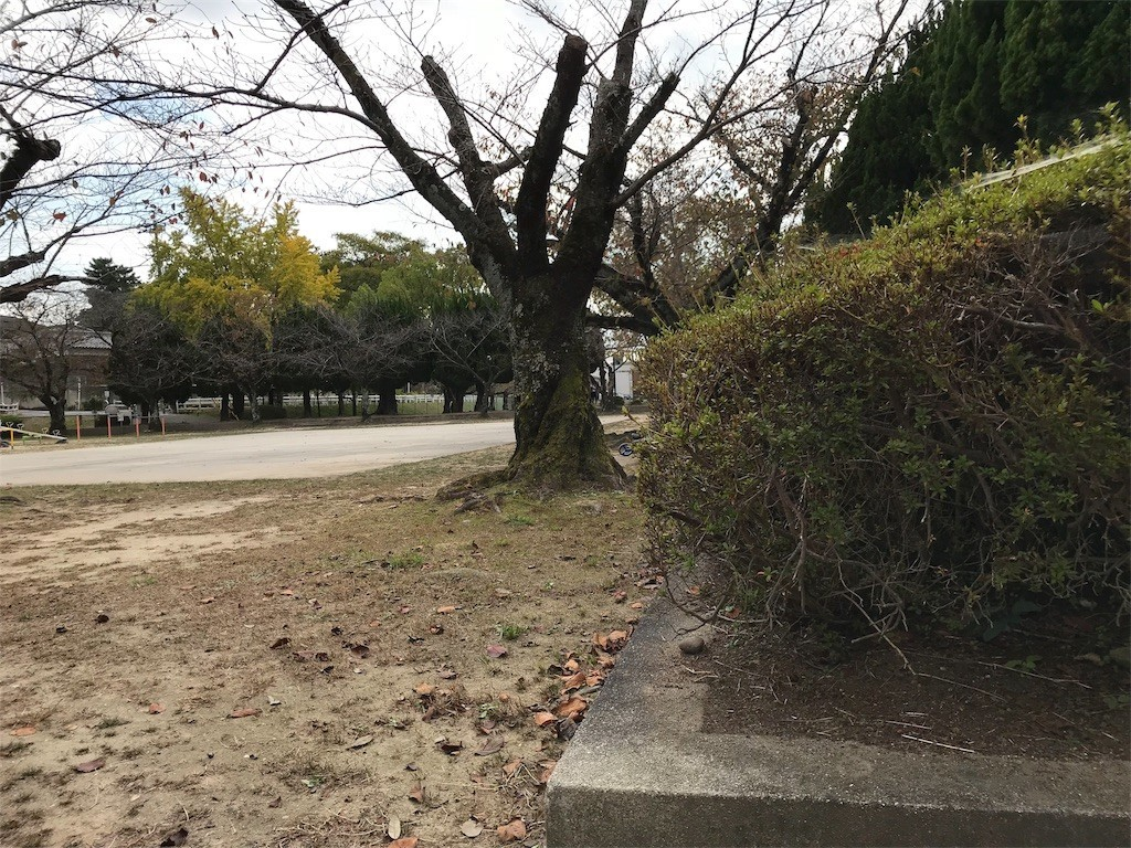 f:id:mihoboshi:20191109224322j:image