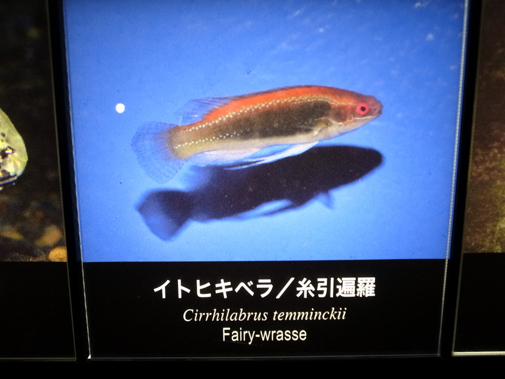 f:id:mihocomiho:20150627152337j:plain