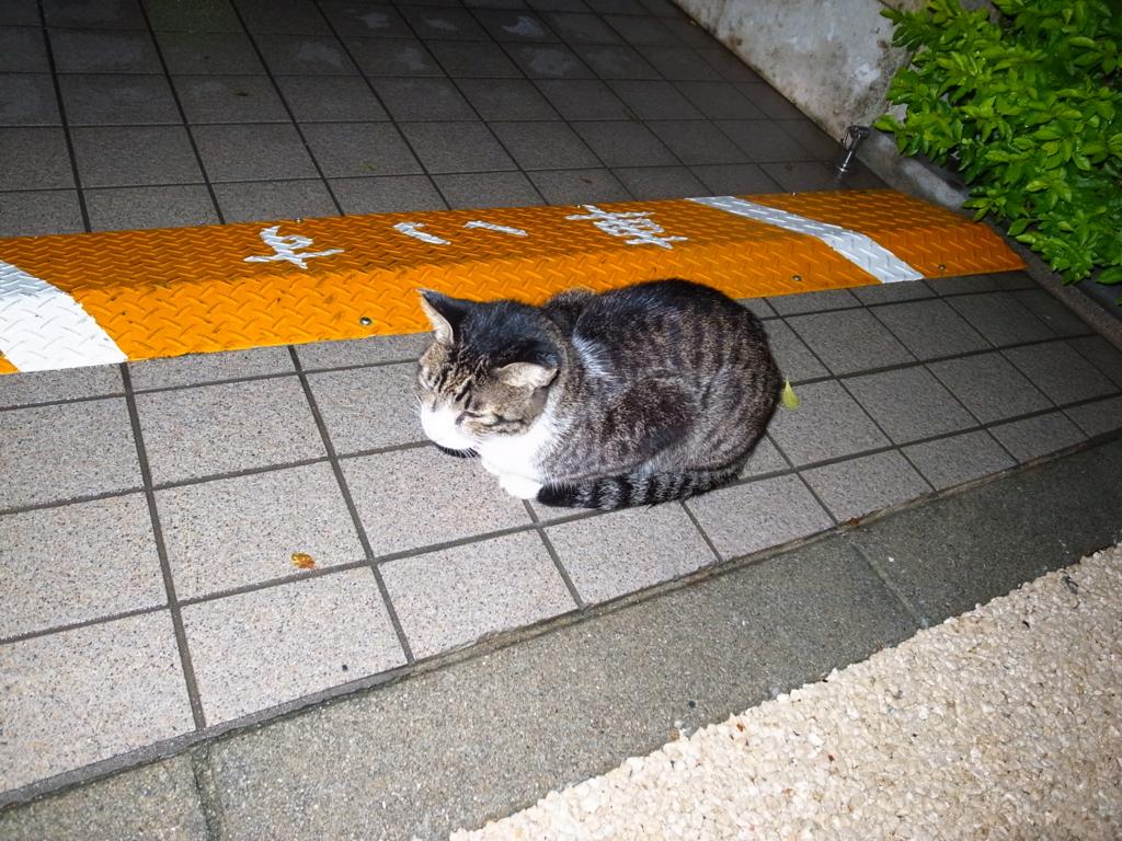 f:id:mihocomiho:20151023203033j:plain