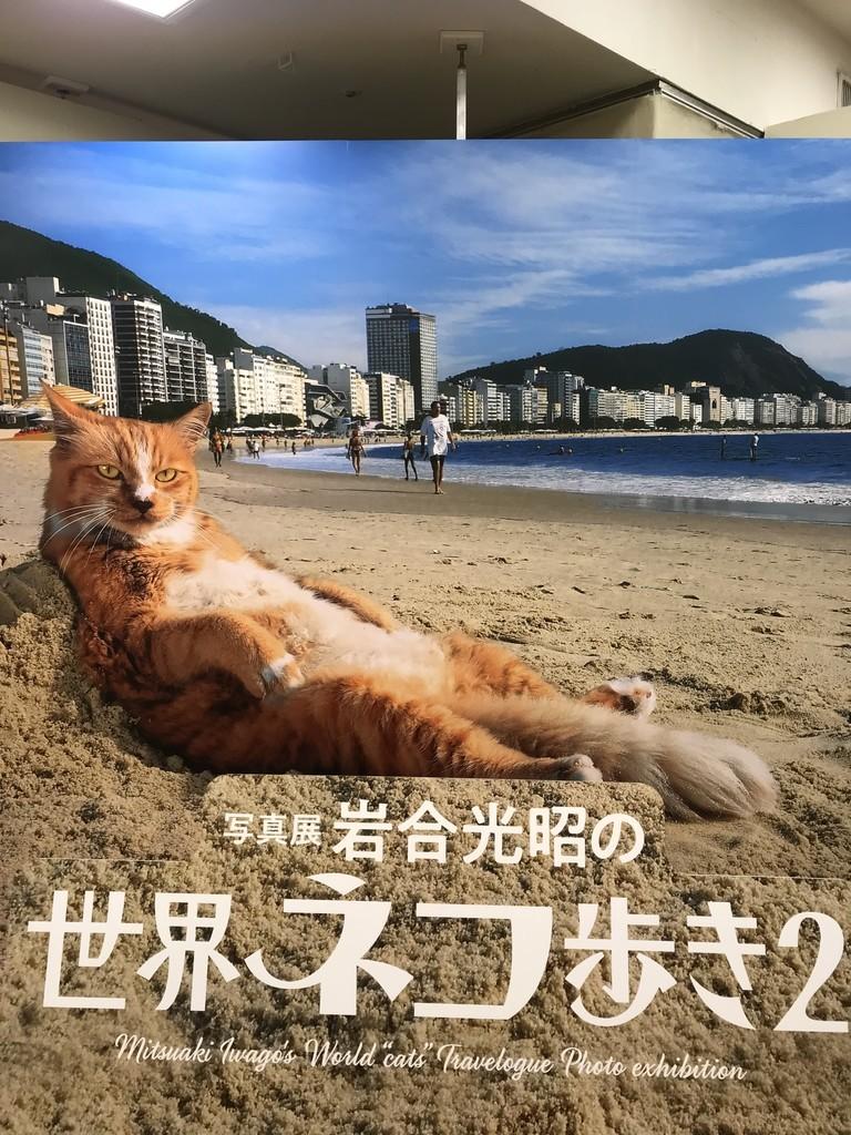 f:id:mihoko_az:20190113161213j:plain