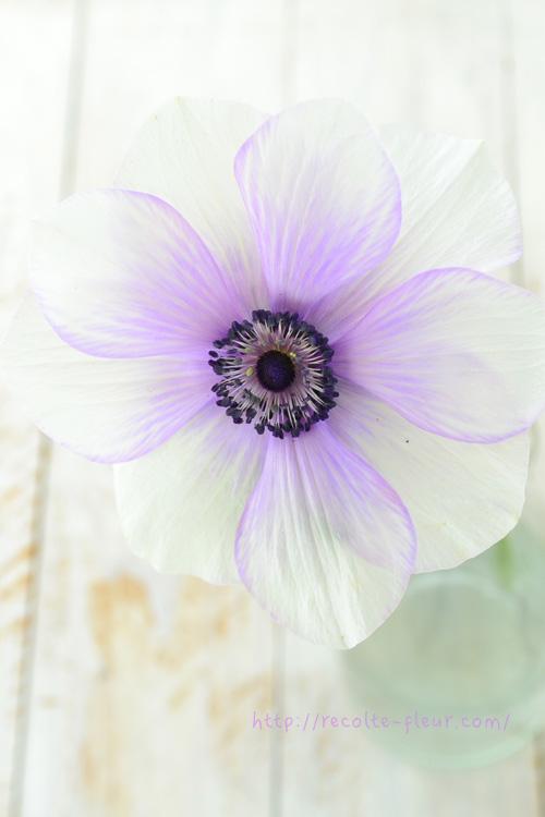 f:id:mihokokaneko:20180111140939j:plain