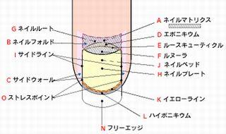 f:id:mihomoriyama:20150417154413j:plain