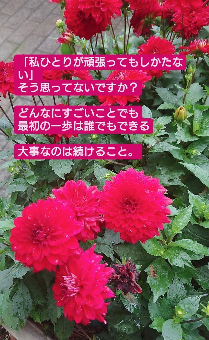 f:id:mihoyamabuki:20200706203418j:plain